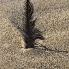 Feather in the sand